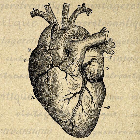 570x570 Heart Anatomy Drawing Inspirational Digital Heart Diagram Graphic