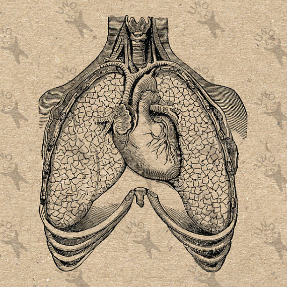 Heart And Lungs Drawing at GetDrawings.com | Free for personal use ...