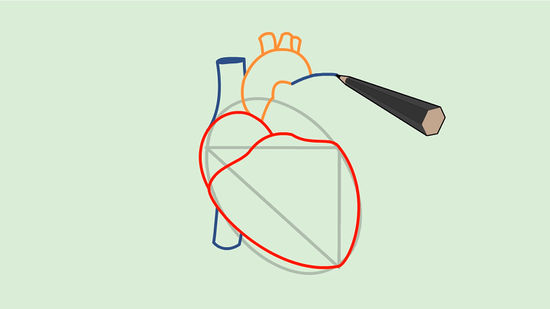 550x309 How To Draw A Human Heart 5 Steps (With Pictures)