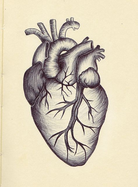 473x640 The Best Anatomical Heart Drawing Ideas On Anatomical Heart Vector