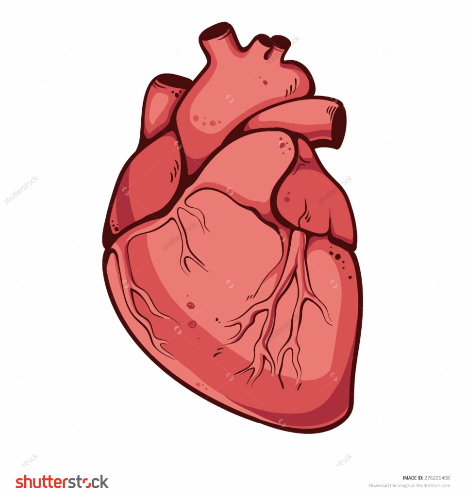 960x1024 Drawing Of A Real Heart