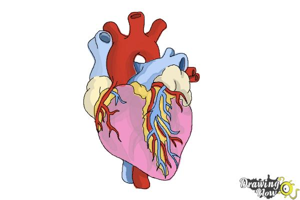 600x400 How To Draw A Real Heart