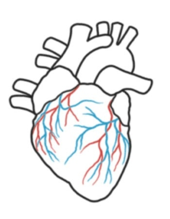 350x450 real heart drawing step by step