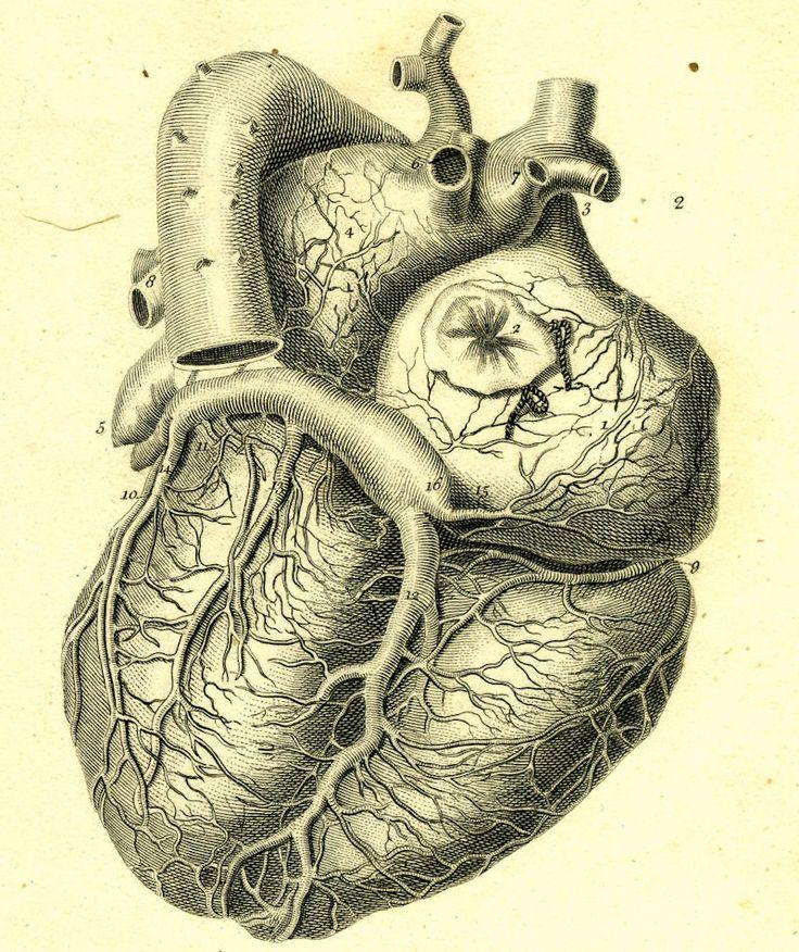 736x876 Anatomi Organlar 18 Anatomy Organs 18 Find Us On Gt Httpswww