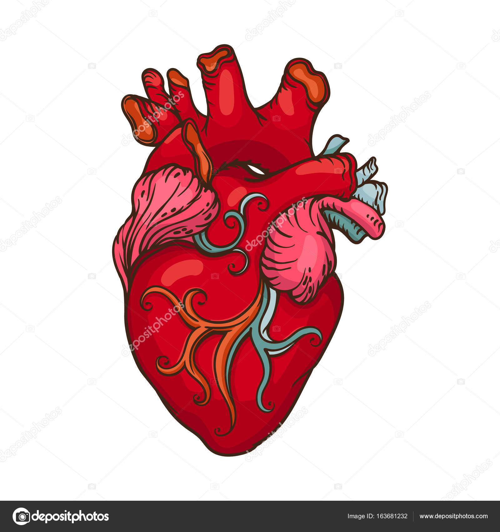 1600x1700 Drawing Of Stylized Human Heart Stock Vector Nevada31