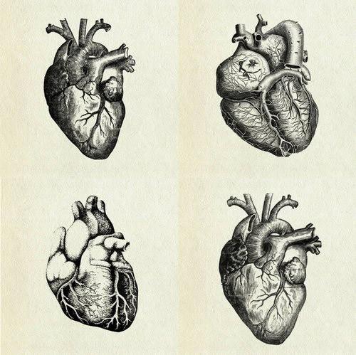 500x499 Heart Anatomy Drawing Luxury Best 25 Human Heart Ideas