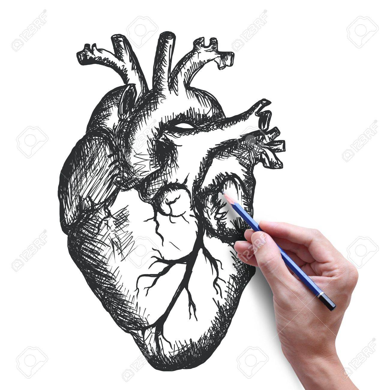 1300x1300 Heart Drawing On White Background Stock Photo, Picture And Royalty