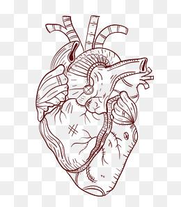 260x297 Heart Organ Png Images Vectors And Psd Files Free Download