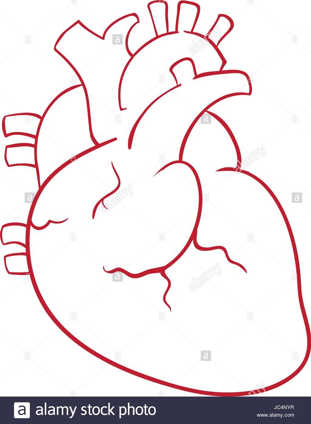 1021x1390 Human Heart Draw Stock Vector Art Amp Illustration, Vector Image