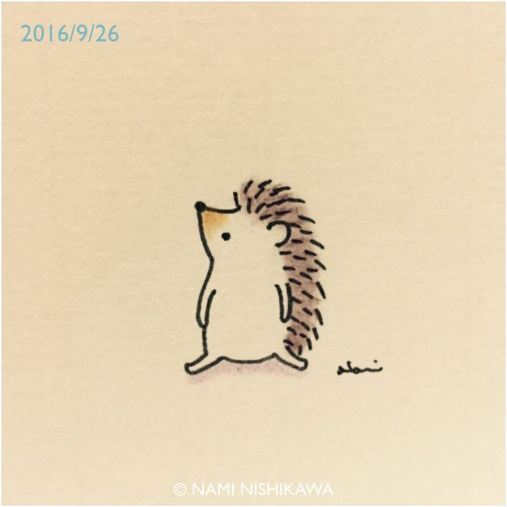 736x736 190 Best Hedgehogs Images On Hedgehogs, Band And To Draw