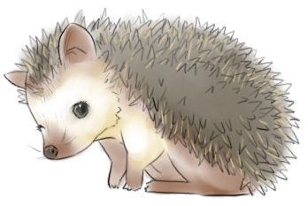 Line Drawing Hedgehog : Pascal s hedgehog under the rain drawings