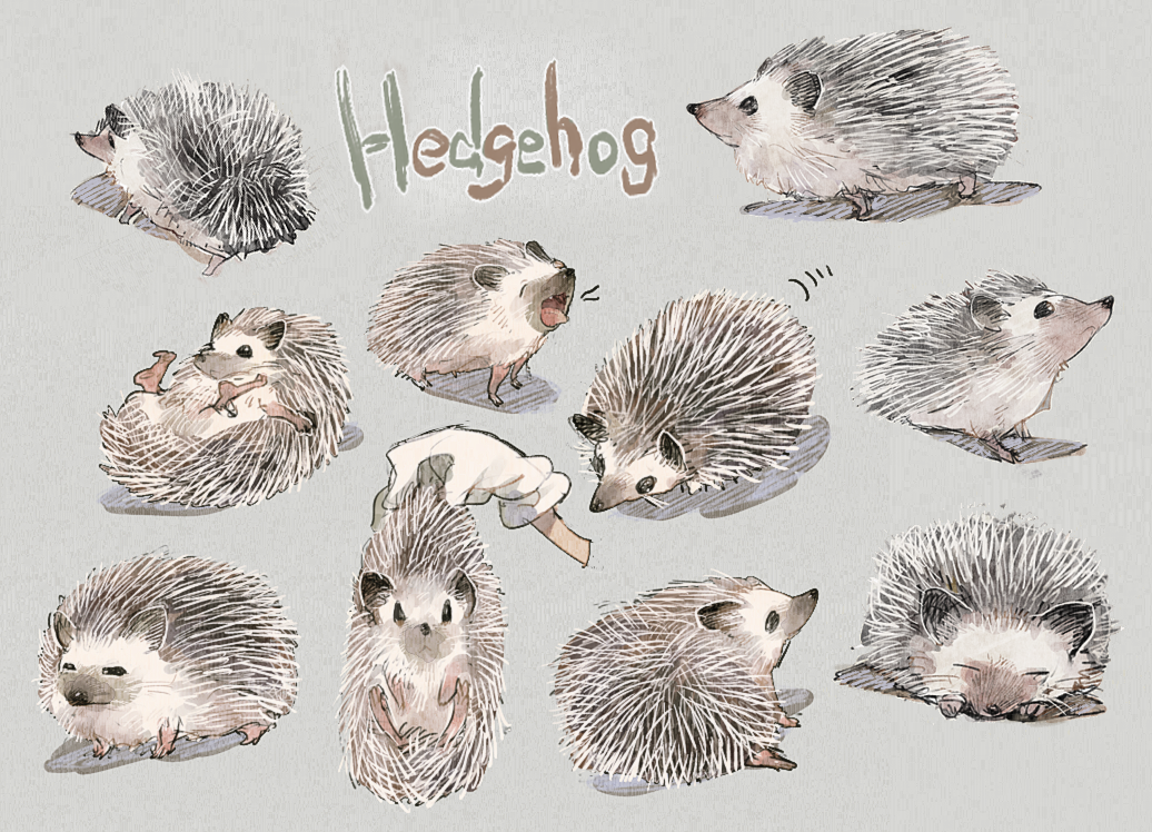 1036x748 hedgehog by aoki6311 on deviantart
