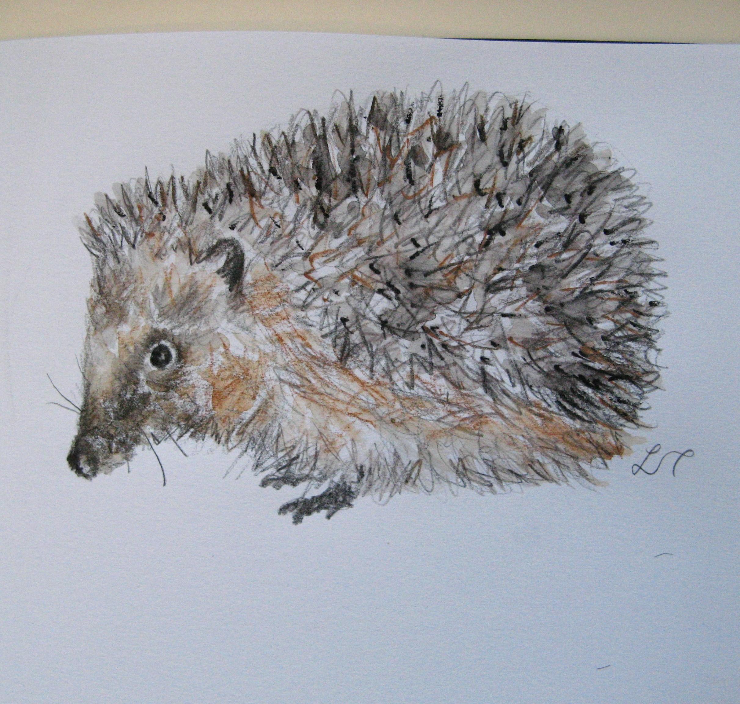 2423x2304 Hedgehog Drawings Agnesandcora