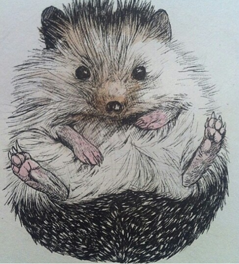487x538 Hedgehog Colored Pencil Drawing Hedgehogs