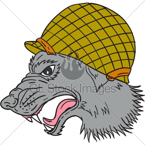 500x500 Grey Wolf Head Growling Ww2 Helmet Drawing Gl Stock Images