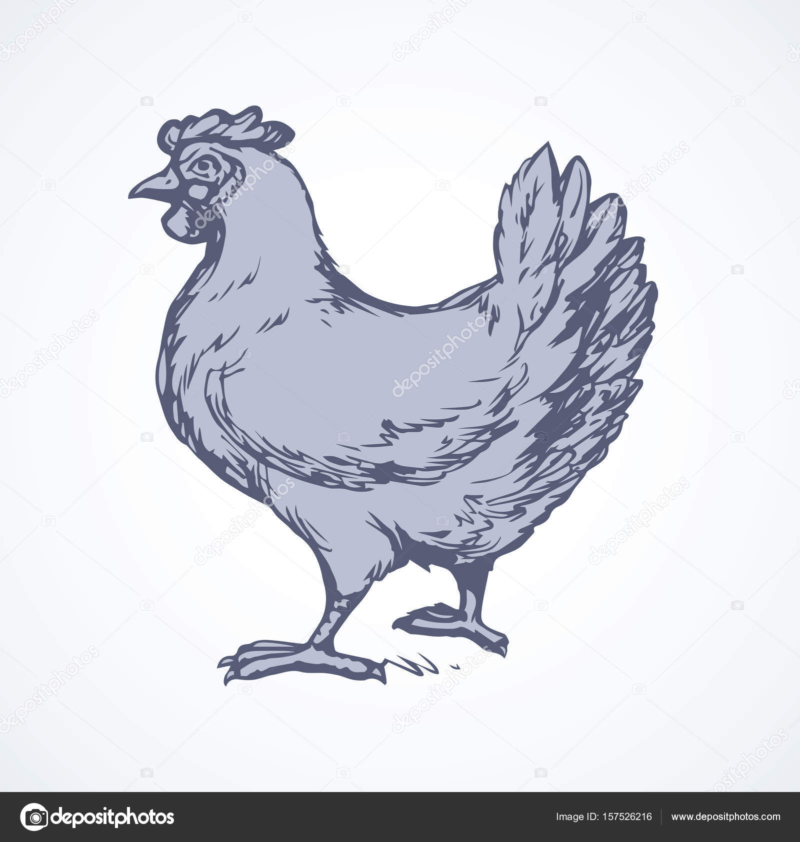 1600x1685 Hen. Vector Drawing Stock Vector Marinka