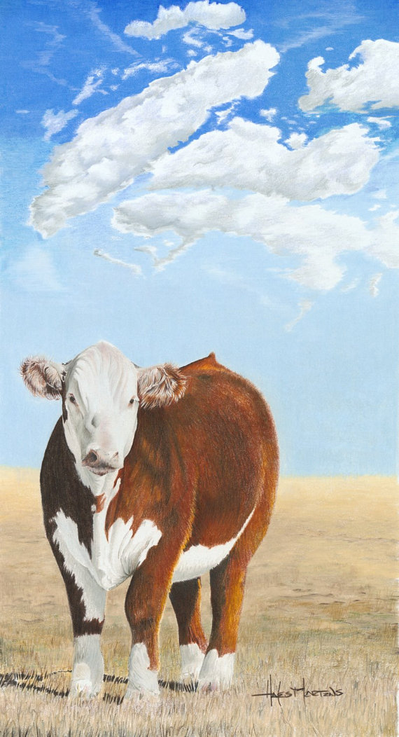 570x1052 Hereford Cow Art Print Cattle Drawing With Color Pencils Cows