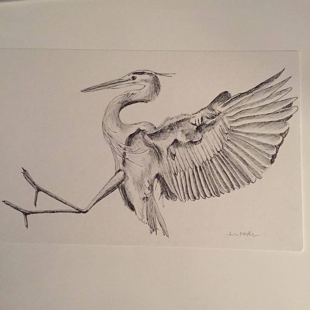 1080x1080 Blue Heron Drawing