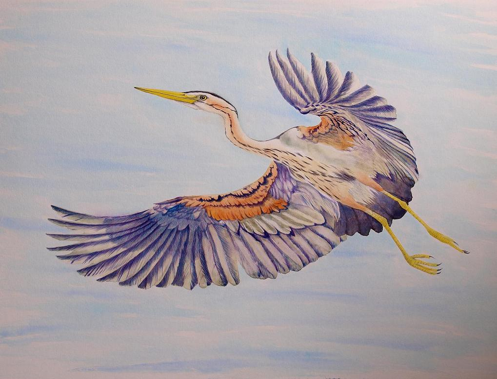 1019x777 Glamorgan Rarities Committee Purple Heron Drawing.