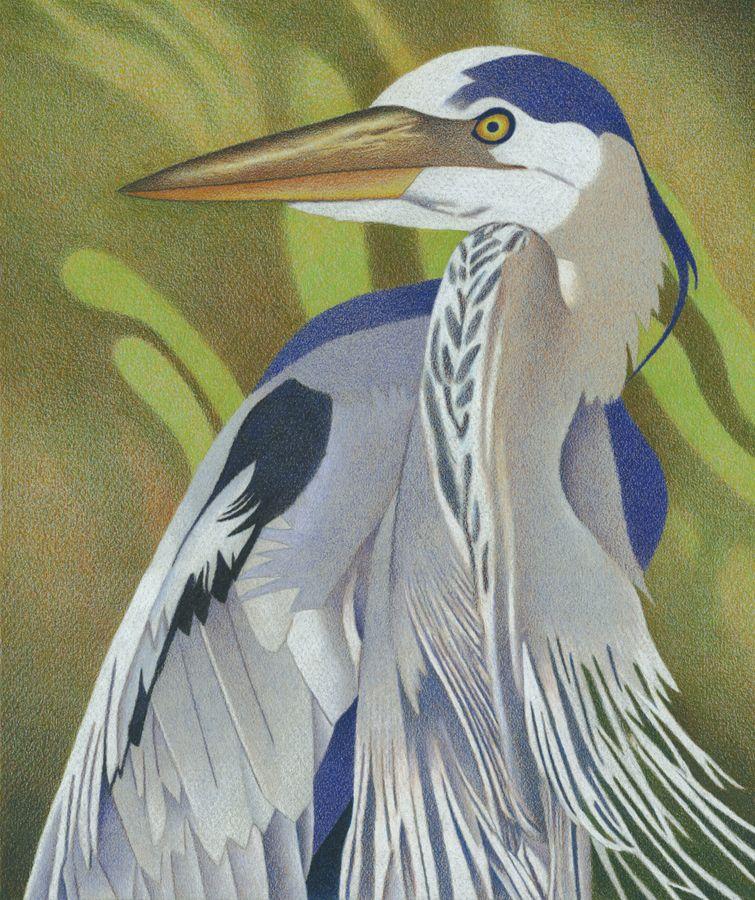 755x900 Great Blue Heron