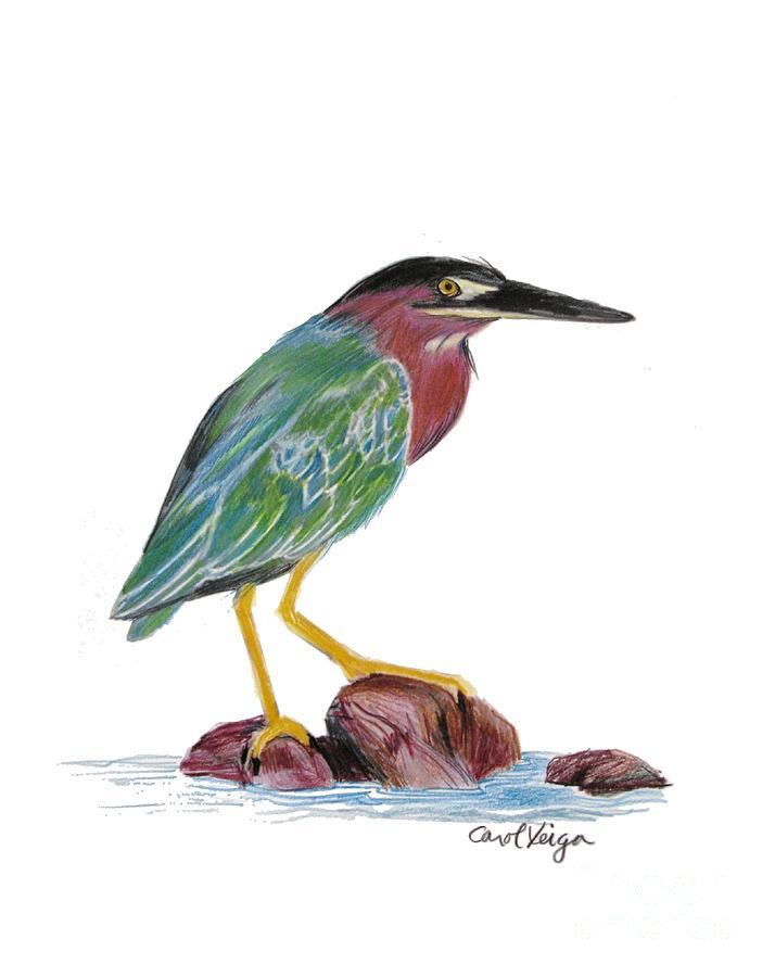 714x900 Green Backed Heron Drawing By Carol Veiga