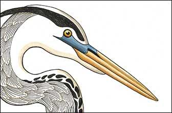 336x220 Kim Russell Original Drawings Ink And Acrylic Drawings Bird