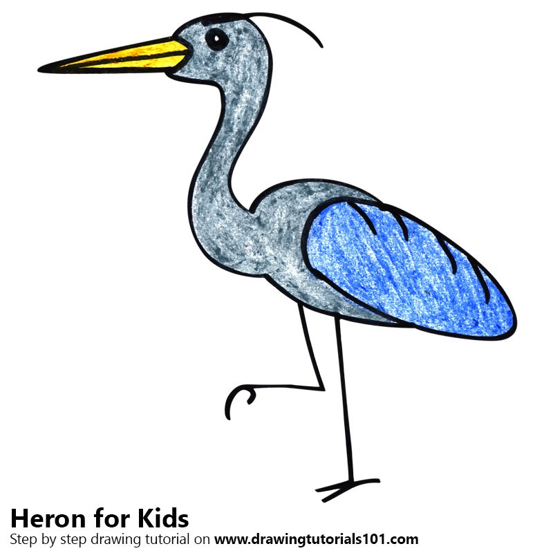 800x800 Learn How To Draw A Heron For Kids (Animals For Kids) Step By Step