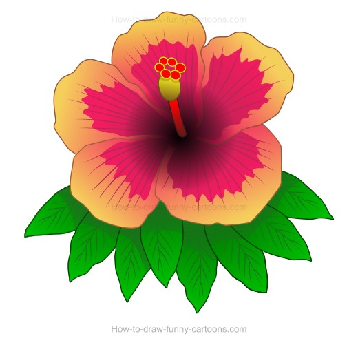 520x504 How To Create A Hibiscus Drawing