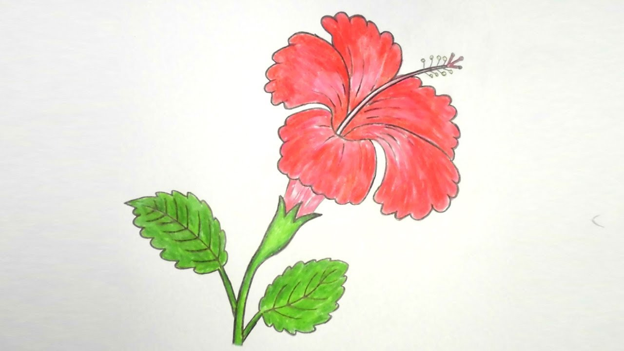 1280x720 How To Draw Hibiscus Flower Step By Step Very Easy