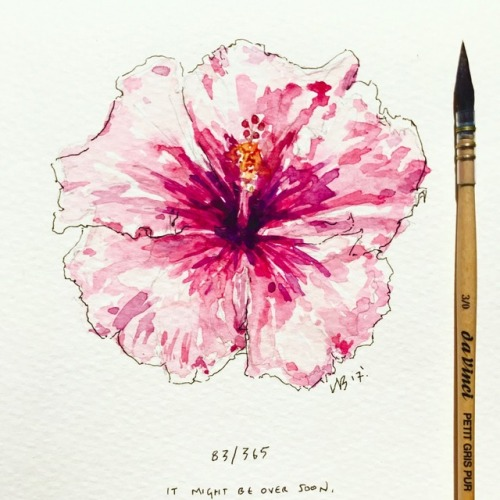 500x500 Hibiscus Drawing Tumblr