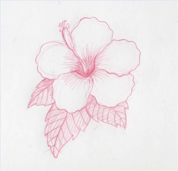 600x574 Drawn Hibiscus Hawaii Flower
