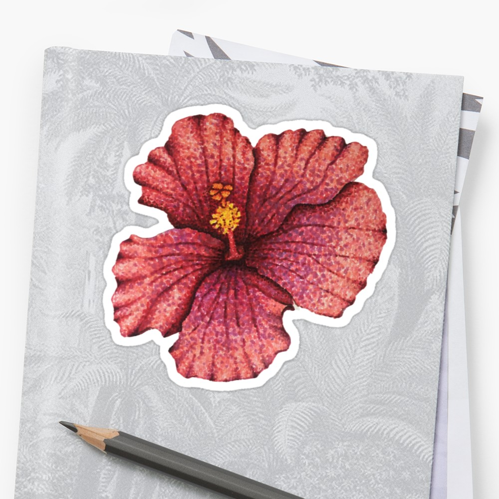 1000x1000 Hawaiian Hibiscus Flower Drawing Stickers By Nicole Owens Redbubble