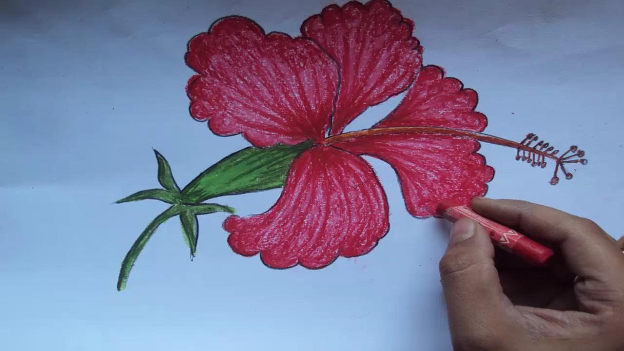 1280x720 How To Draw A Beautiful Hibiscus Flower Step By Step