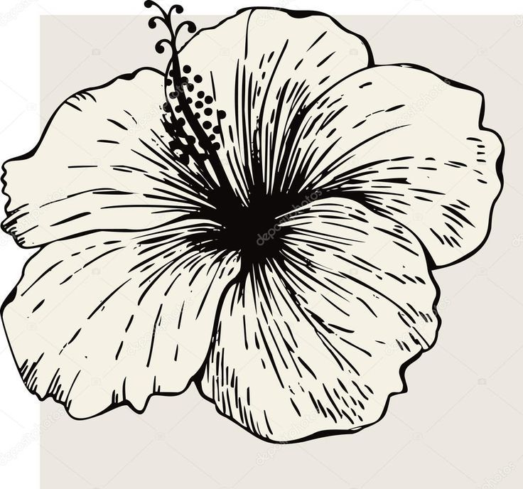 736x688 Image Result For Hibiscus Doodles Planning A Life She Loved