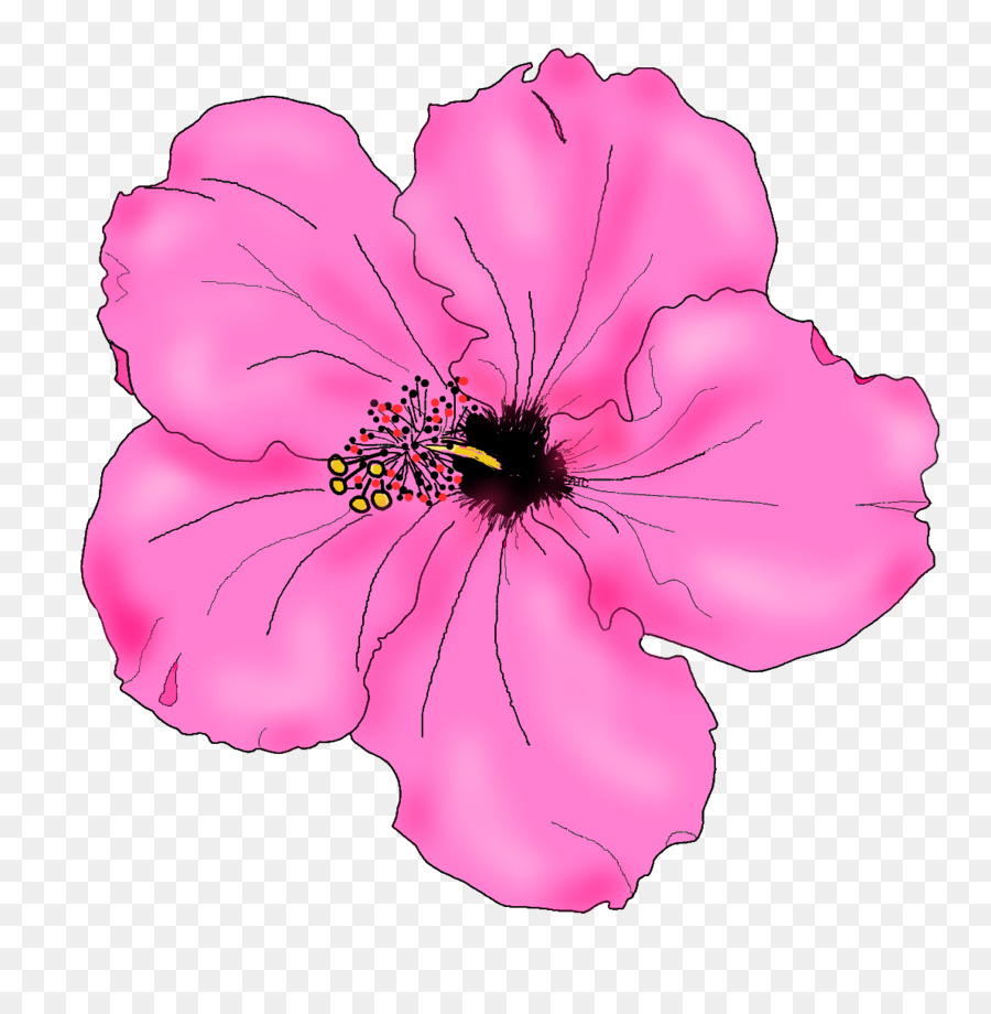 Hibiscus flower drawing at getdrawings free for personal use 900x920 shoeblackplant drawing flower clip art izmirmasajfo