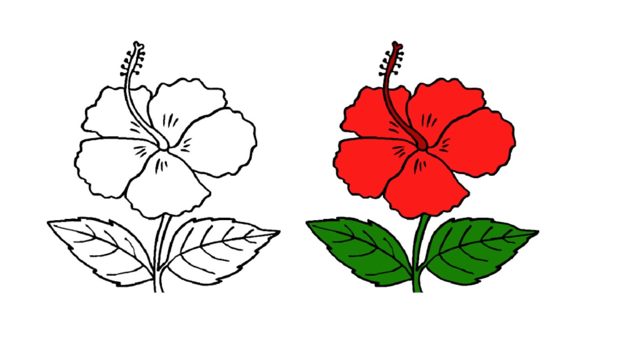 Hibiscus flower drawing easy flowers healthy 1280x720 fun to drawing easy and simple way draw a flower china rose hibiscus flower drawing step by step at getdrawings free for izmirmasajfo