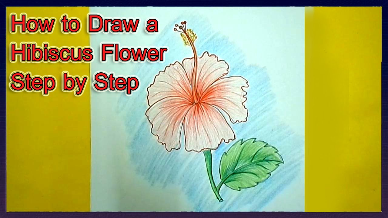 1280x720 How To Draw A Hibiscus Flower Step By Step