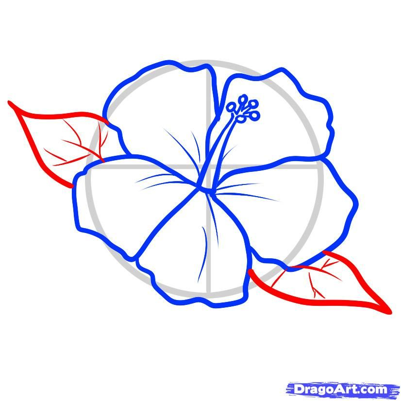 826x826 Hibiscus Pattern To Draw How To Draw A Hawaiian Tattoo Step By