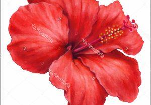 300x210 Hibiscus Flower Drawings