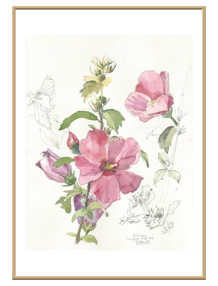 750x982 Hibiscus Flower N3 Floral Print Of Watercolour And Pencil Drawing