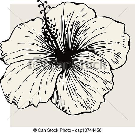 450x441 Clipart Vector Of Hibiscus Flower Csp10744458