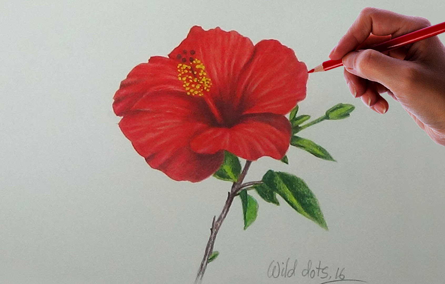 1692x1080 Pencil Drawings Of Hibiscus Flowers Drawing A Flower
