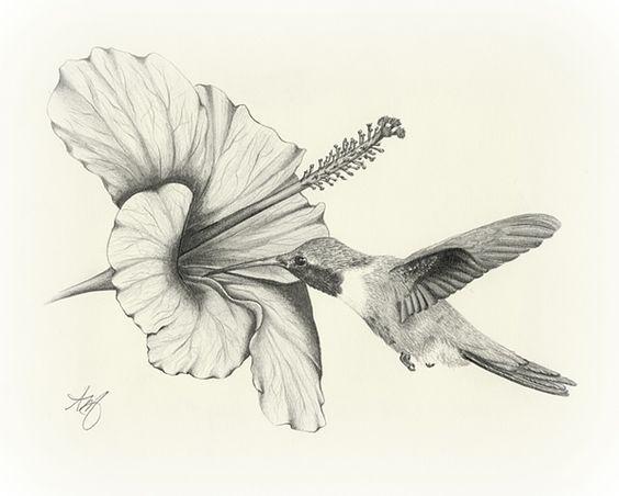 564x452 Amazing Pencil Drawings Flowers Drawing Sketch Art Wildlife Bird