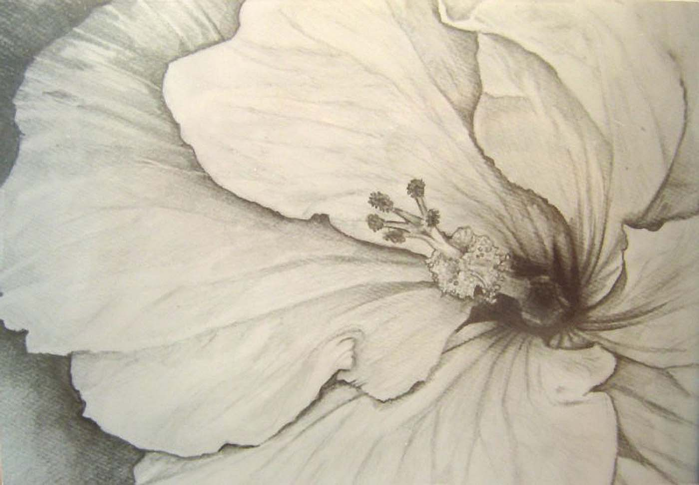 1400x972 Hibiscus By Greenxwitch