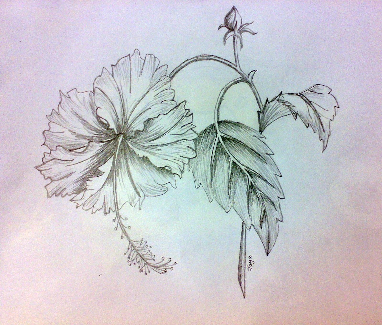1600x1359 Pencil Sketch Of Hibiscus Flower Jaya's Shades Pencil Sketching