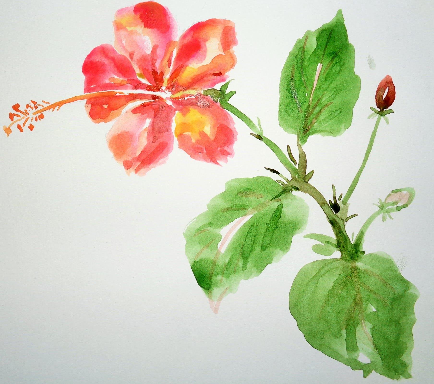 1808x1597 Sketch Of Hibiscus Flowers Sketch Of Hibiscus Hibiscus Flower