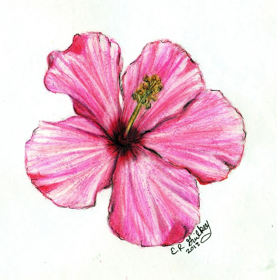 Hibiscus plant drawing at getdrawings free for personal use 889x900 hibiscus drawing by elizabeth guilkey izmirmasajfo