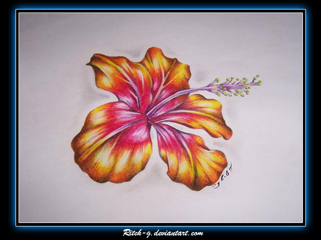 640x480 Hibiscus Drawing By Ritch G