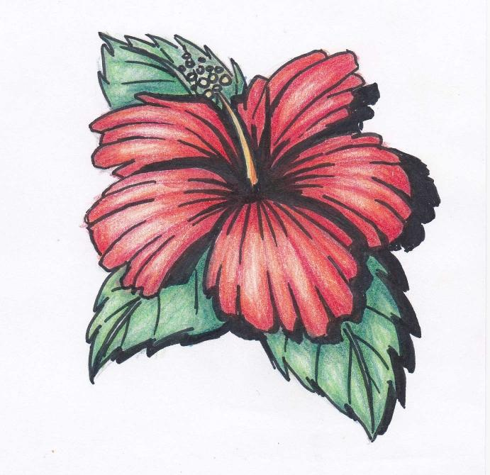 691x670 Hibiscus Flowers Drawing Tutorial