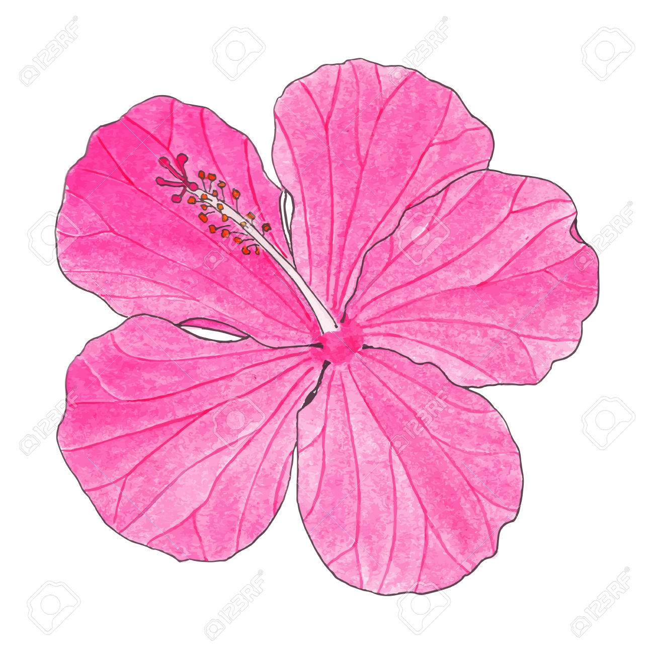 1300x1300 Hibiscus. Hand Drawn Flower. Real Watercolor Drawing. Vector